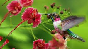 hummingbird flowers attracting hummingbirds hummingbirds plus