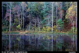 picture photo trees fall colors reflected pond blue