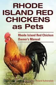 rhode island red chickens as pets rhode island red chicken