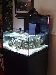 Okeanos Aquascaping Amazon Aquatics On Aquariums Aquascaping And Fish Tanks