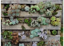 vertical plants for garden wall art ideas 2749 hostelgardennet