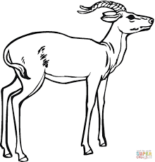 impala coloring page free printable coloring pages