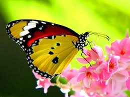 butterfly pictures kids search