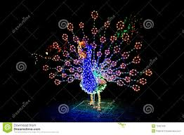 Lighted Peacock Christmas Decoration Lighted Peacock Display Stock Photo Image Of Christmas 12421436