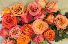 Wholesale Roses The Orange Rose Study Flirty Fleurs The Florist Blog
