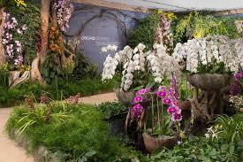 orchidelirium wttw chicago public media television and interactive