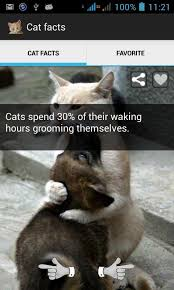 Cat Facts Meme - cat facts android apps on google play
