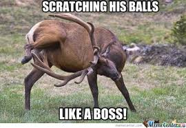 Funny Deer Memes - deer scratching his balls by likeaboss meme center