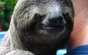 Angry Sloth Meme - haloguy77 s profile