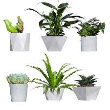 online shop cement flowerpot succulent planter solid geometry