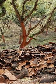 cork harvest for the patient farmer kuriositas