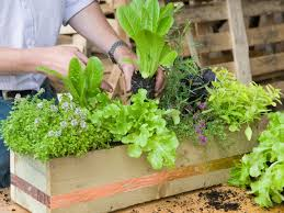 make a window box of herbs and lettuce hgtv