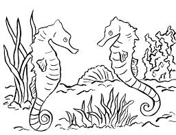 seahorse coloring page olegandreev me