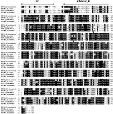 characterization of a novel cotton subtilase gene gbsbt1 in