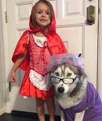 halloween costumes for grandma the best diy dog costumes for halloween pedigree foundation