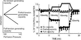 mysteries of renal autoregulation hypertension