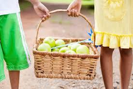 best apple picking farms in nj