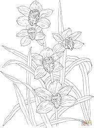 coloring pages of orchids cymbidium rosanna orchid coloring