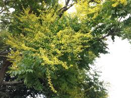 i have this tree in my norwich township neighborhood and my bees