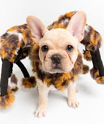 Spider Dog Halloween Costume Buy Spider Dog Halloween Costume Aenyx 49 99