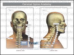 Human Anatomy Anterior Anatomy Cervical Spine Cervical Spine Anatomy Anterior Amp Lateral