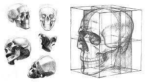 how to draw a skull anatomy master class anatomy master class
