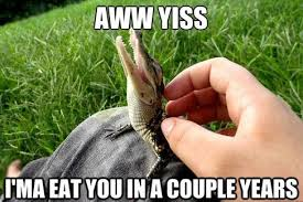 Alligator Memes - alligators kill the hydra