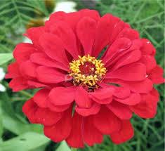 real flowers real flowers flower shop in uae flower shop s online directory