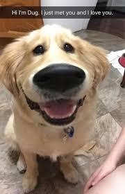 Meme Dog - dog meme dump album on imgur