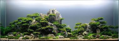 Aga Aquascape Best Aquascapes Of 2014 Aquarium Info