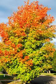 why do leaves change color in the fall news presspubs