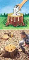 How To Make End Tables Out Of Tree Stumps by Top 25 Best Tree Stumps Ideas On Pinterest Tree Stump Furniture