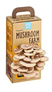 amazon com back to the roots organic mushroom farm amazon launchpad