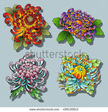 vector black chrysanthemum flowers set tattoo stock vector