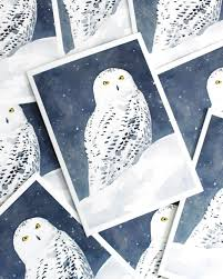 owl christmas snowy owl christmas card set david scheirer watercolors