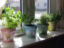 indoor gardening explore best indoor gardening ideas