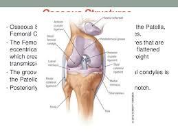 Knee Anatomy Pics Anatomy And Examination Of The Knee