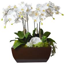 orchid arrangements phalaenopsis orchid arrangement large white transitional