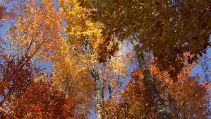 picturesque autumn landscape of sunset colored trees and rust