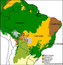 native plants of brazil how rainforest beef production affects wild animal suffering