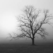 nicholas bell black and white photography trees landscape
