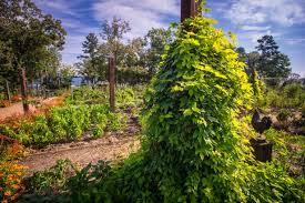 create a vertical vegetable garden hgtv