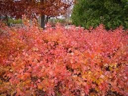 deciduous shrub picture base landmark landscapes lincoln
