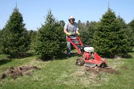 Planting Christmas Tree Seedlings Christmas Tree Farming Throughout The Year Collopyfamilyfarm