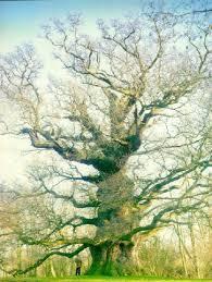 european trees