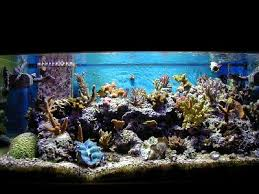 Reef Aquarium Lighting Reef Tank Photo Galleries Marine Aquarium Pictures