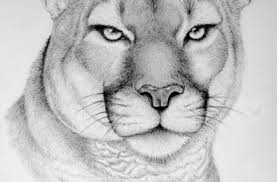 tag for animals all pencil sketches wild animal pencil drawings