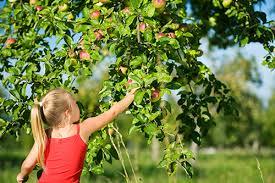 fresh fruit online want free fresh fruit find it online earth911