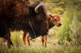 North Dakota how does sound travel images North dakota driving guide theodore roosevelt national park b h jpg