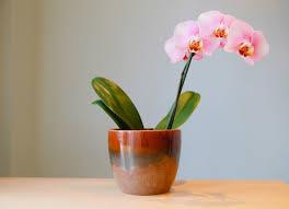 10 houseplants that are surprisingly hard to keep alive bob vila